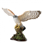 A27052 Kestrel in Flight - Border Fine Arts