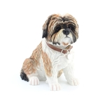 Brown Shih Tzu Sitting with Leather Collar