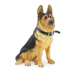 German Shepherd Sitting with Leather Collar