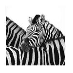 Zebra Hug SMALL Framed Print