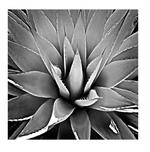 Succulent III SMALL Framed Print