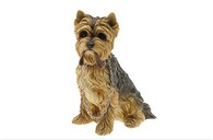 Walkies Yorkshire Terrier Sitting