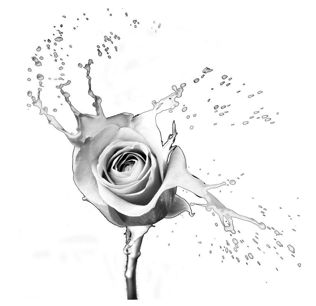 Rose Splash White Small Framed Print By Framed Prints Keillers